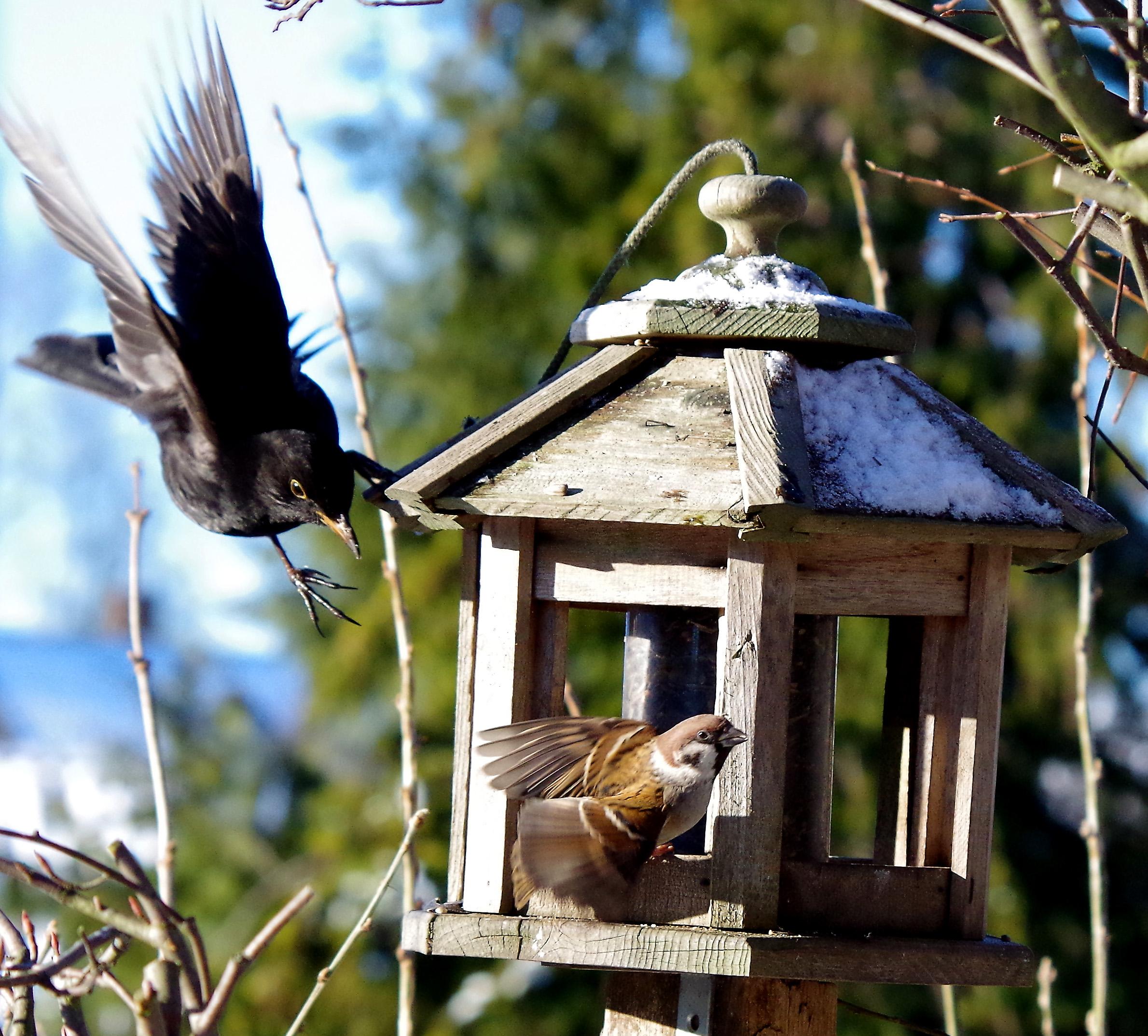 Vid fågelbordet